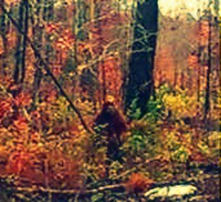 Sasquatch/Pomoola sighting in Maine | Sasquatch Chronicles | 743 x 682 jpeg 69kB