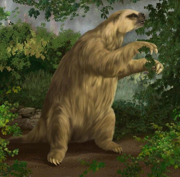 Giant ground sloth still alive